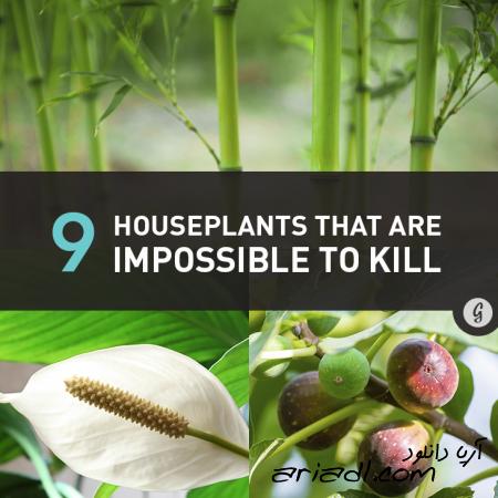 9 گیاه اکسیژن ساز خانگی را بشناسید